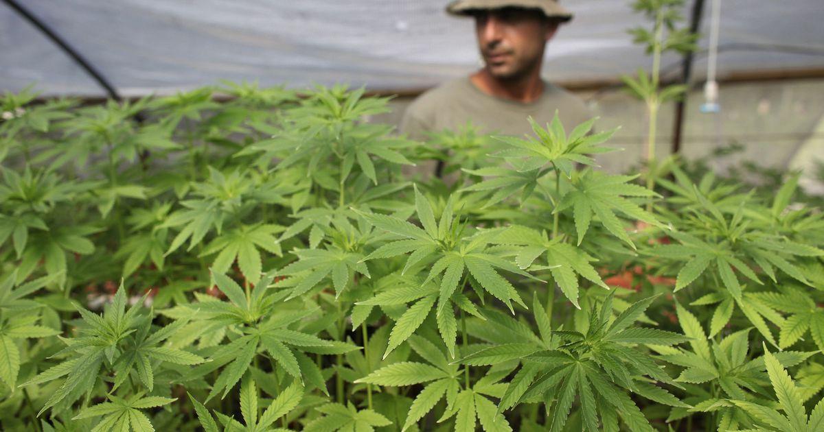 Хайфа купить марихуану для чего курят коноплю через трубку